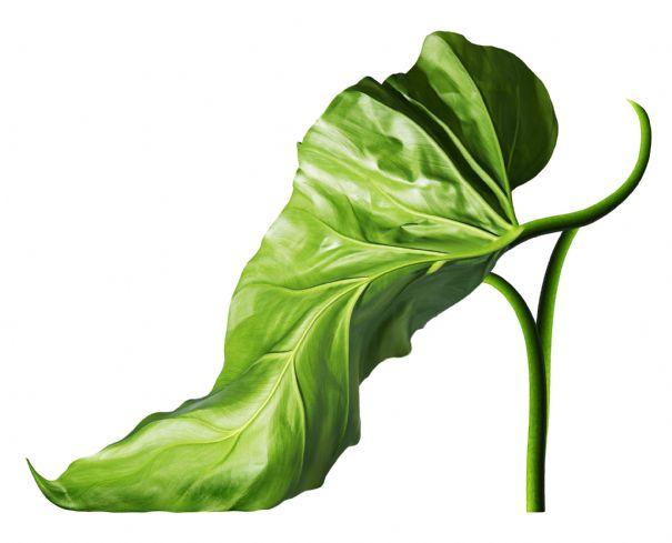 обувка листо