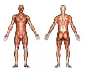 тялото