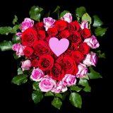 картини от цветя
